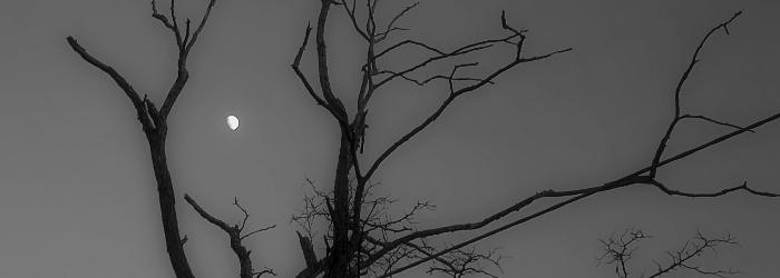 darknessbanner